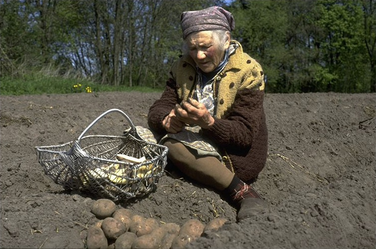 Lena im Kartoffelacker