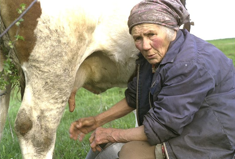 Lena Grigoleit beim Melken ihrer Kuh Rose