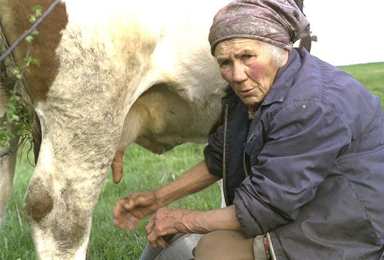 Lena beim Melken