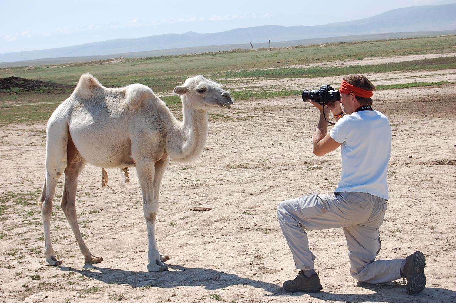 weisses Kamel in kasachischer Steppe bei Dshambul