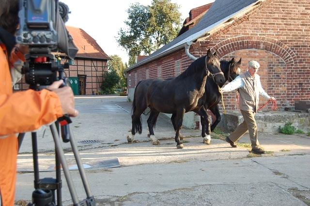 Josef Selhorst führt seine Pferde über den Hof