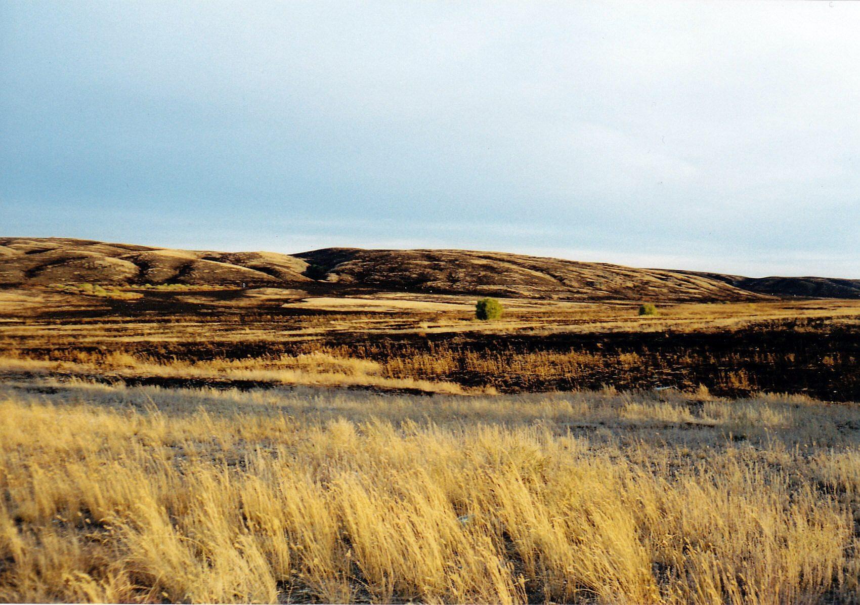 Kasachische Steppe im Spätsommer