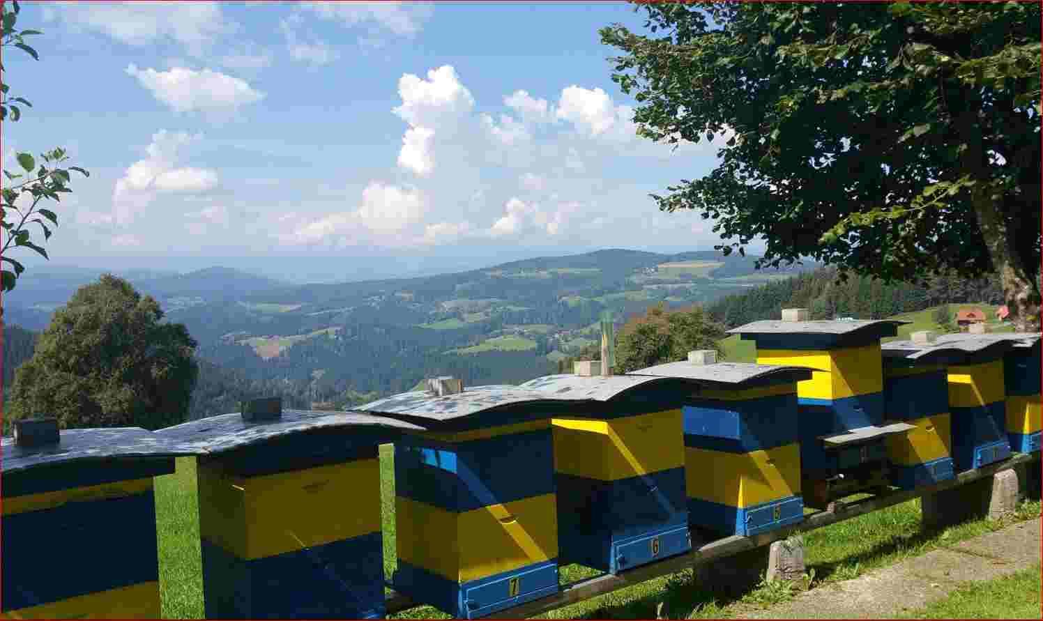 Bienenstöcke in Kärnten