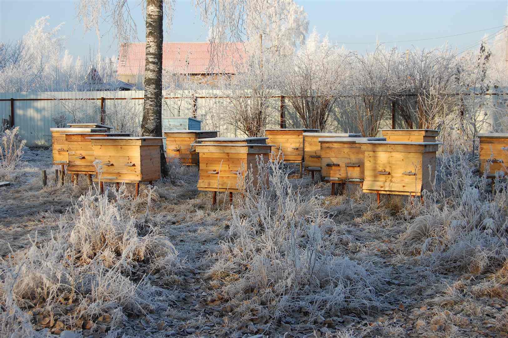 Die Bienen werden mit Steppdecken gegen die Kälte geschützt